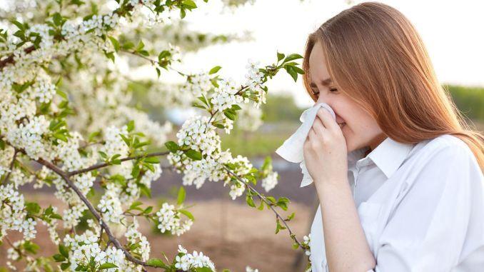 Dị ứng phấn hoa là gì? Triệu chứng, chần đoán và cách điều trị