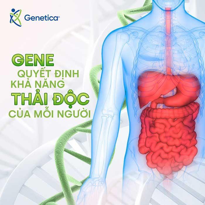 Gen quyết định đến khả năng thải độc ở mỗi người